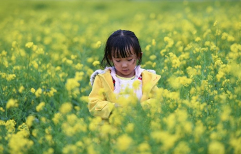 Blooming cole flowers attract tourists in NW China