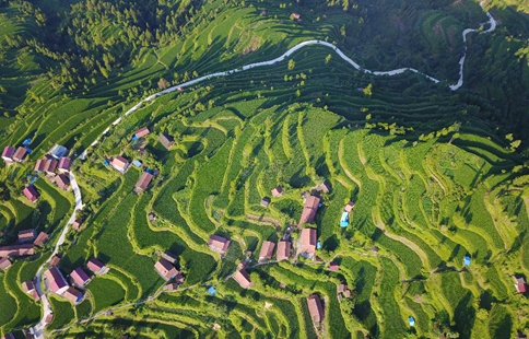 Scenery of terraced fields at SW China's Miao village