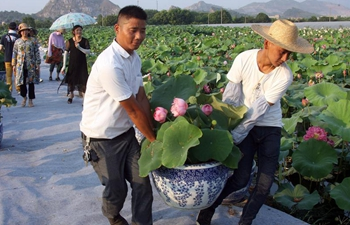 Farmers in E China benefit from cultivating ornamental lotuses