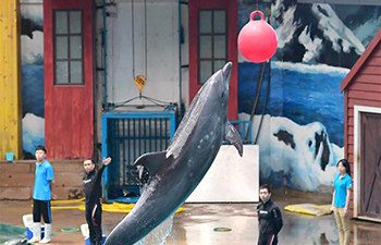 In pics: dolphin training in NW China's Shaanxi