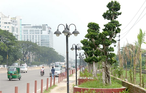 Bangladesh imports scores of bonsai ficus trees from China