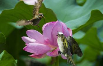 Birds dance with lotus flowers in E China