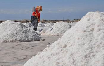 Workers harvest crude salt in NW China