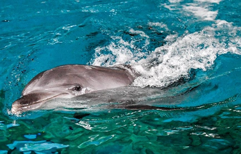 Bottlenose dolphins transported to ocean kingdom in Harbin
