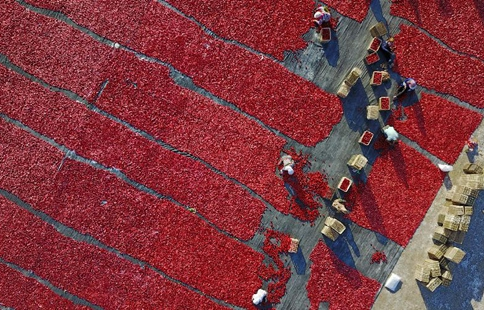 Villagers dry tomatoes under the sun in China's Xinjiang