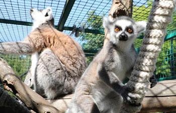 In pics: animals at Sarajevo zoo