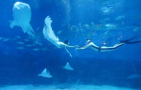 Underwater wedding show greets Qixi festival in E China