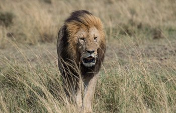 In pics: animals at Maasai Mara National Reserve