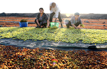 Farmers make raisins out of fine quality grapes in China's Xinjiang