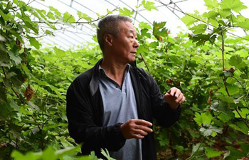 Pic story: Chinese grape and wine expert