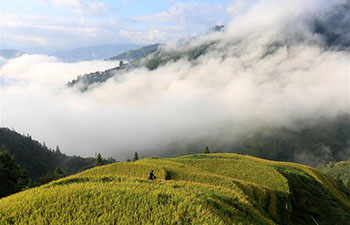 Autumn scenery of terraced rice fields in Jiayi, China's Guizhou