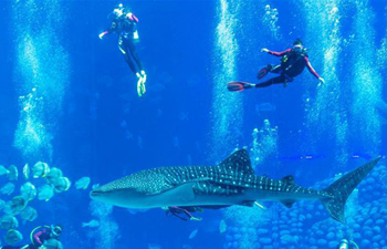 Tourists dive with whale sharks at ocean park in south China's Zhuhai
