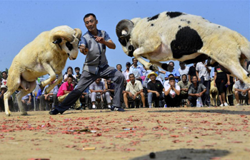 In pics: goat fight in east China's county