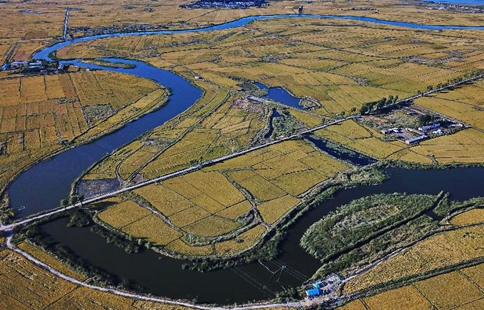 Scenery of paddy fields in Baicheng, NE China's Jilin