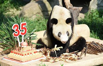 Panda Xinxing's 35th birthday celebrated at Chongqing Zoo
