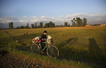 In pics: paddy harvest season in Indian-controlled Kashmir