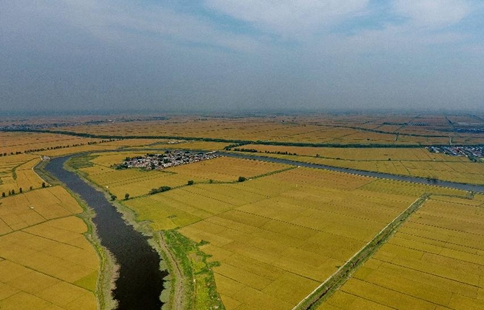 Scenery of paddy fields at Tangshan in N China's Hebei