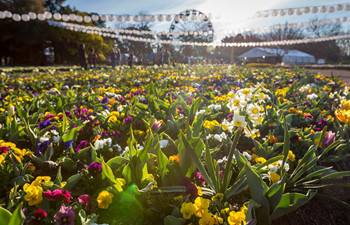 Floriade 2017 held in Canberra, Australia