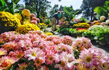 9th cultural festival of chrysanthemum flowers kicks off in Beijing
