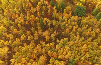 In pics: scenery of Saihanba forest in N China's Hebei