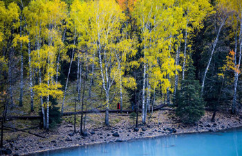 Autumn scenery of Kanas scenic area in NW China's Xinjiang