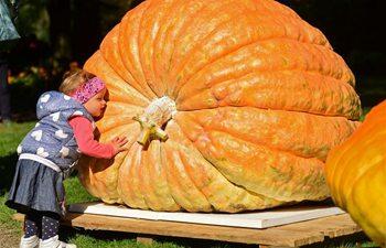Meet Slovenia's pumpkin contest winner