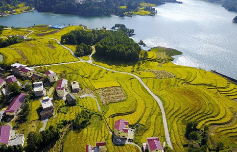 Autumn scenery of paddy fields in SW China's Guizhou