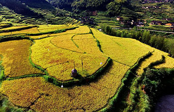 Scenery of terraced fields in Houyuan Village, China's Fujian