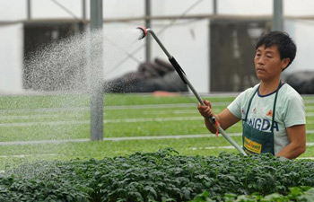 In pics: Vegetable Cooperative in N China's Hebei