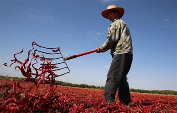 Chilis sundried in NW China's Gansu