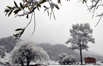 Snow scenery of Binggou Forest scenic area in NW China's Qinghai