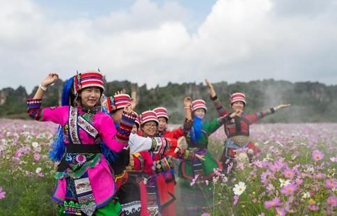 Cosmos flowers enter blossom season at Shilin in China's Yunnan