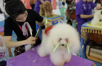 Shanghai pet festival kicks off