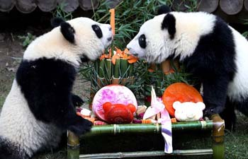 Panda twin cubs celebrate birthday at Shanghai Wild Animal Park