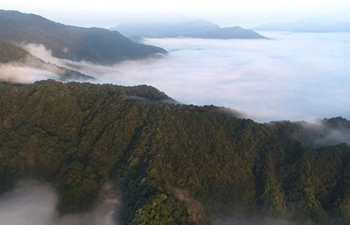 Last primary forest in east China: Tiantangzhai