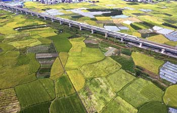 Bullet train runs among fields in SW China
