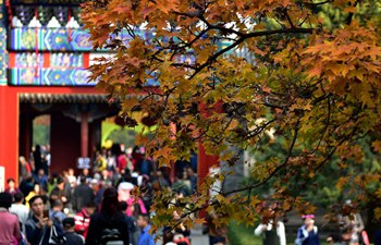 Red leaves enrich autumn palette of Fragrant Hills Park in Beijing