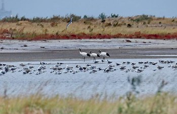 Migrant birds fly to N China for rest and food