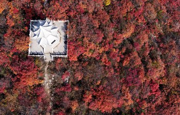 Autumn red: Scenery of red leaves in Jiguan Mountain