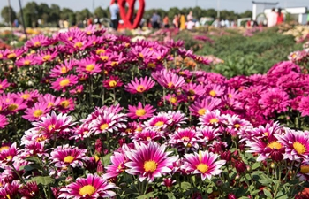 Chrysanthemum base at NJAU to be open to public
