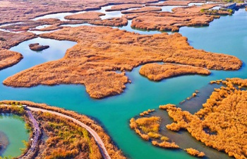 Autumn scenery of Zhangye National Wetland Park in NW China