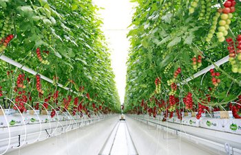 Intelligent greenhouse seen in northwest China's Gansu