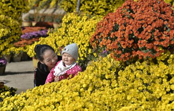 People visit chrysanthemum park in north China's Hebei