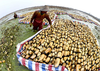 Lotus roots harvested in east China's Anhui