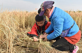 Rice harvesting fair held in Shunyi District of Beijing