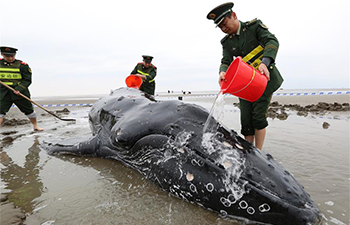 People help stranded humpback whale in E China's Jiangsu