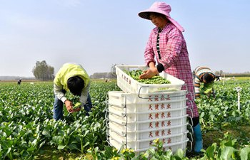 Recycling farming developed in central China's Henan