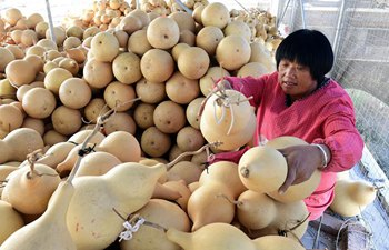East China's Liaocheng encourages calabash business