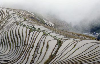 Scenery of terraced fields in S China's Guangxi
