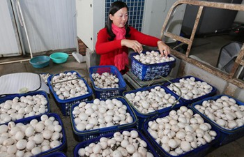 Mushroom cultivation in E China's Jiangsu